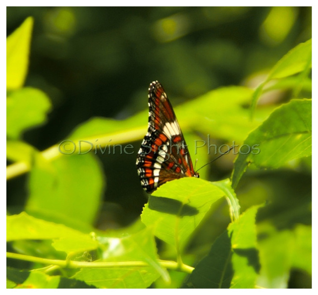 butterfly, nature, bug, inspiring photography, by marlo jane, divine sight photos, www.divinesightphotos.weebly.com